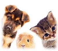 Artículos para Mascotas - Regalos Publicidad